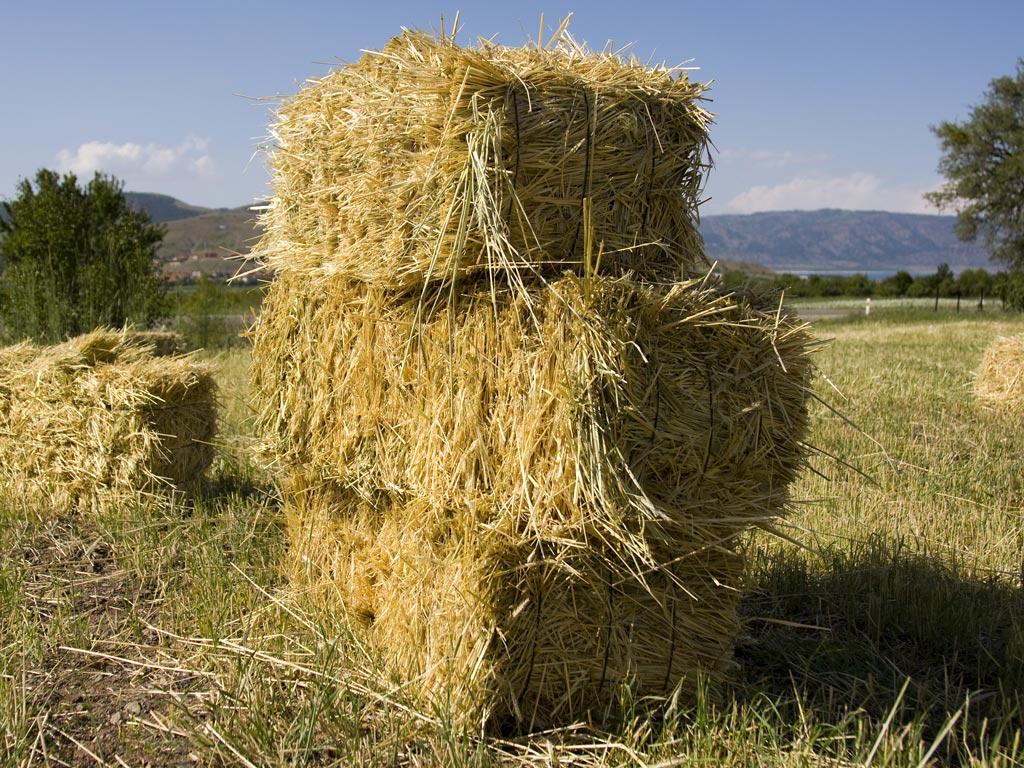 Mulch Hay Bales