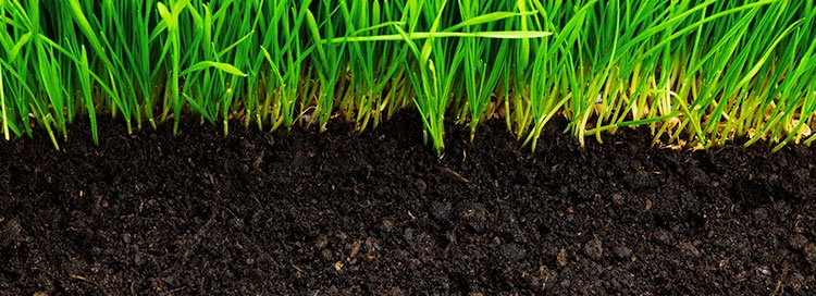 Soil & Manure